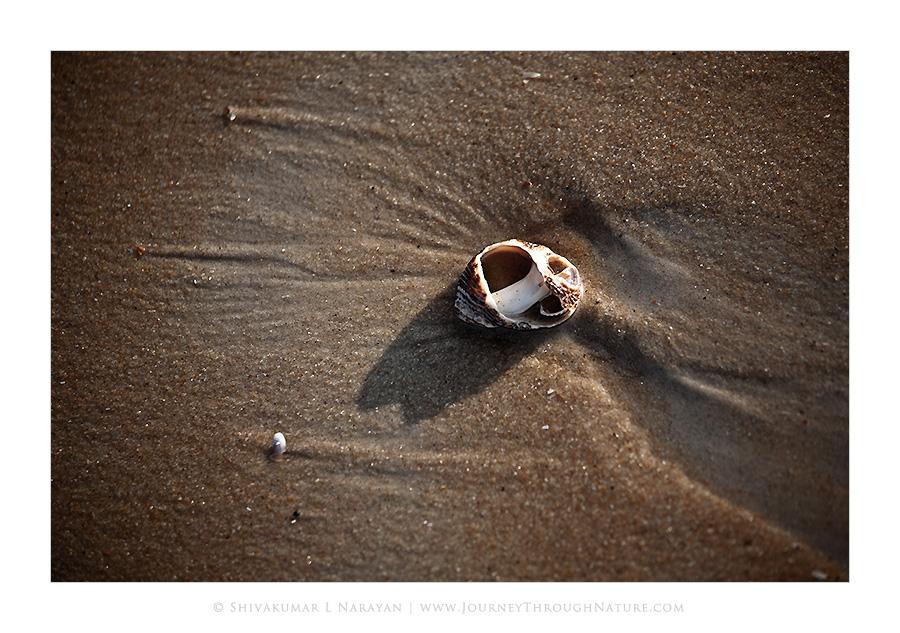 Sea shell on sea shore