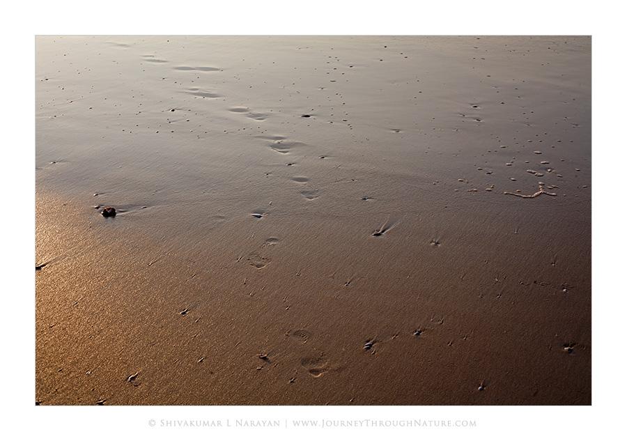 Sea shore after a wave