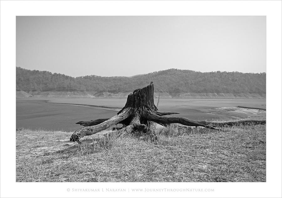 Landscapes of Dhikala, Corbet