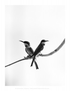 Difference_Of_Opinion-Beeeater