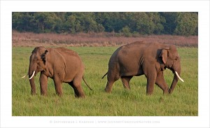 Difference_Of_Opinion-Elephants