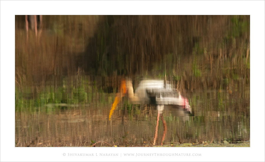 Reflection of painted stork in water