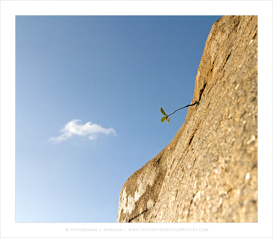 Life, Stone & Dreams