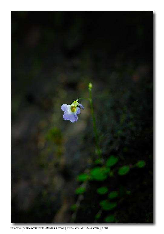 Purple flower depth of field