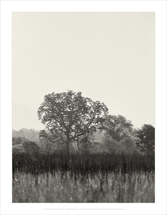Trees of Corbett