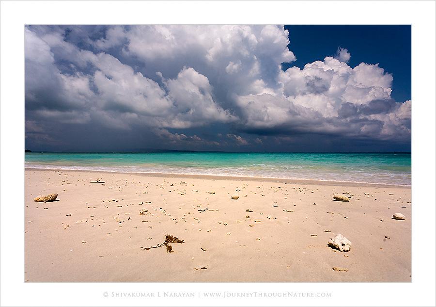 Sea shells on sea shore, Kalapattar, Havelock, Andaman