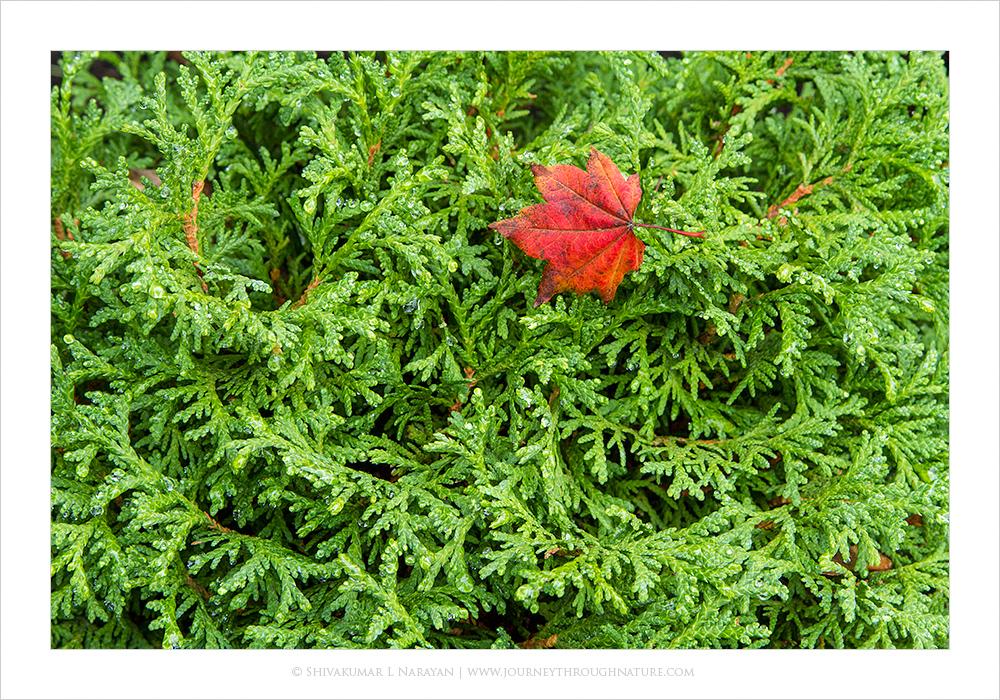 Seattle Autumn Colors
