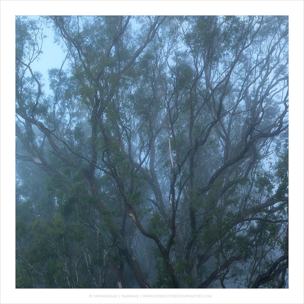 A misty morning at Nandi Hills