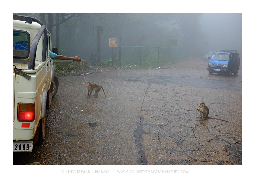 Feeding of wild animals at tourist locations