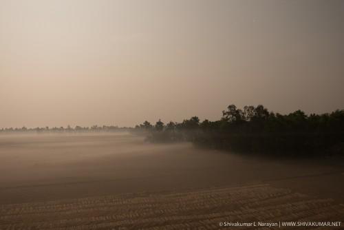 Moonlit landscapes of paddy fields in Sundarbans